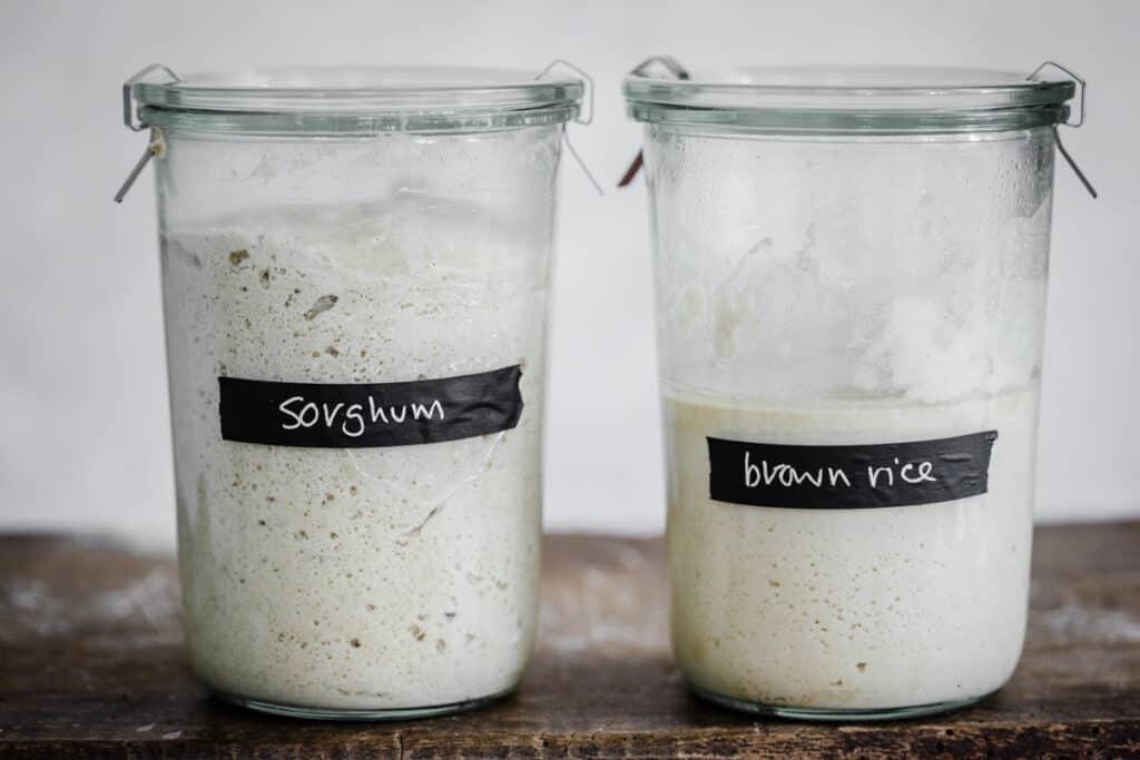 jars of sorghum starter and brown rice starter